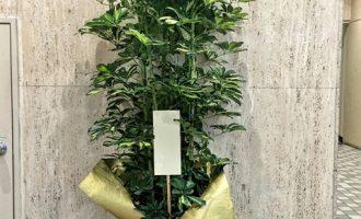 観葉植物を東京へお届け