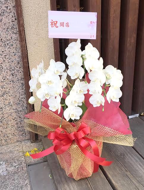 東京都文京区へミディ胡蝶蘭