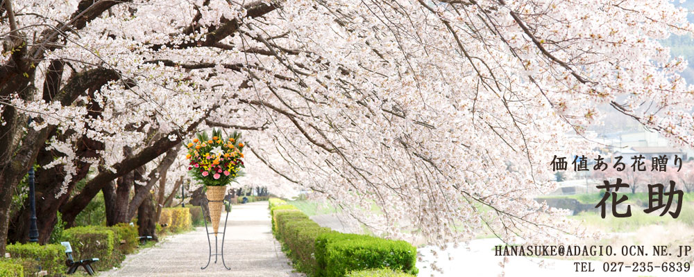 春 桜の下 花助