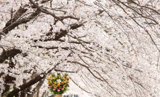 春 お花贈りは花助